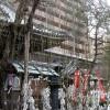 Baum mit Mikuji