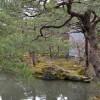 Kiefernbaum