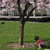 Mädchen unterm Baum