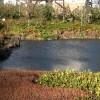 Japanischer Garten mit Sonne